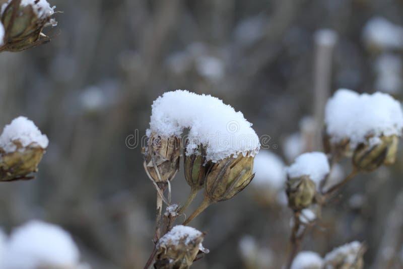 Sneeuw op dode fruit en bloemen stock foto
