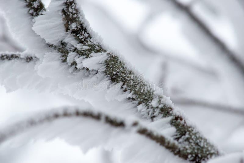 Sneeuw op een Tak wordt verzameld die stock foto