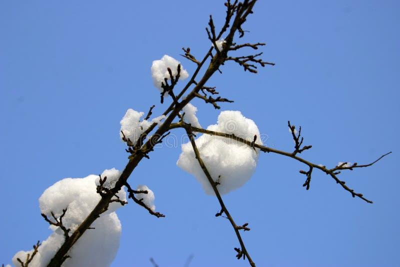 Sneeuw op tak 2 royalty-vrije stock afbeeldingen