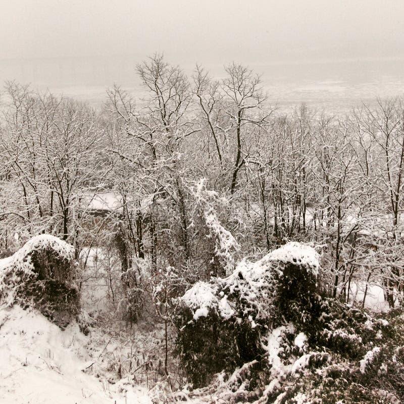 Sneeuw op takken royalty-vrije stock foto's
