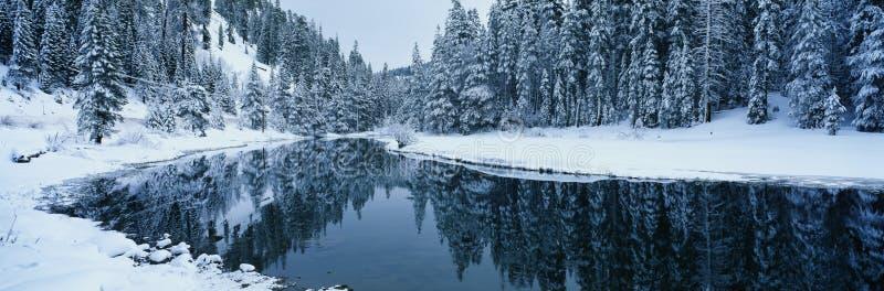 Sneeuw scène op het gebied van Tahoe van het Meer, CA royalty-vrije stock afbeeldingen