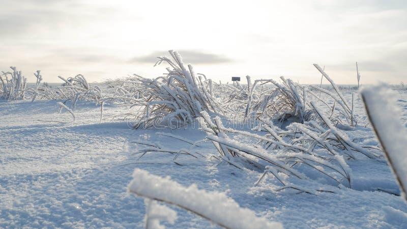 Sneeuw in Siberië stock afbeelding