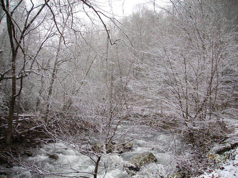 Sneeuw in Smokies stock foto's