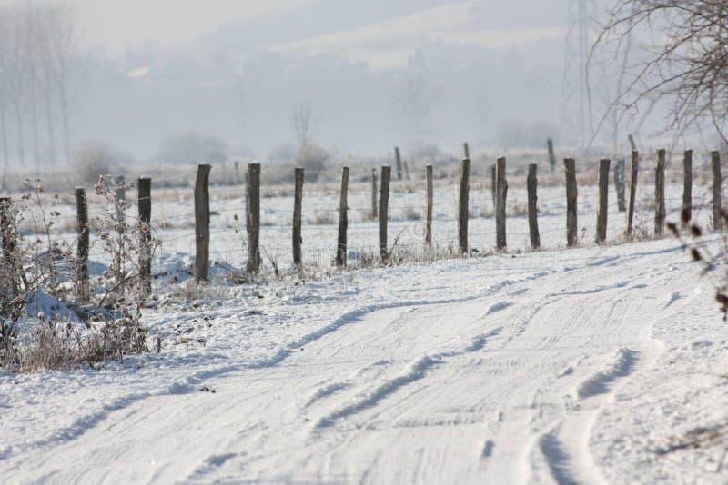 Sneeuw steeg en omheining royalty-vrije stock foto's