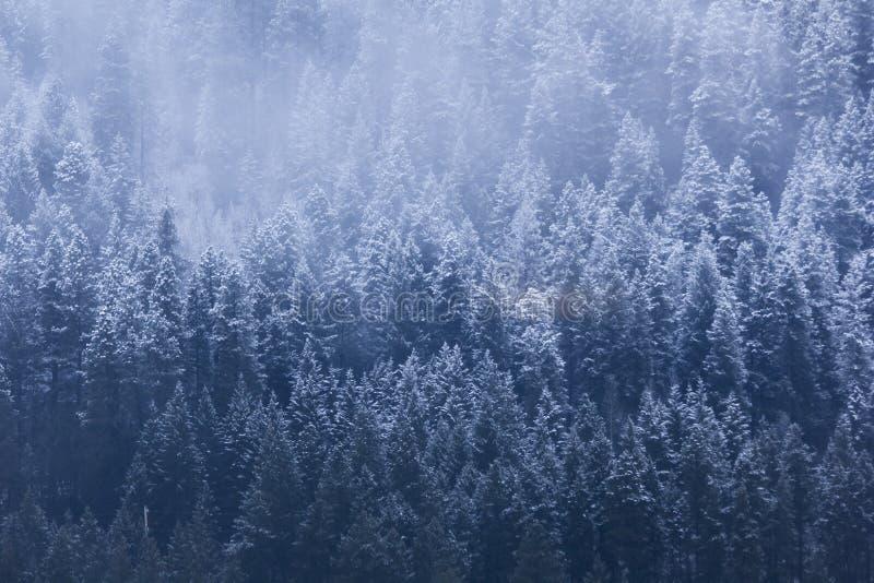 Sneeuw Treeline stock afbeeldingen