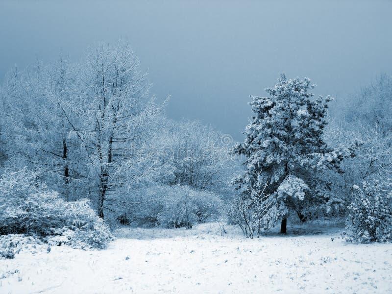 Sneeuw tuin royalty-vrije stock afbeeldingen