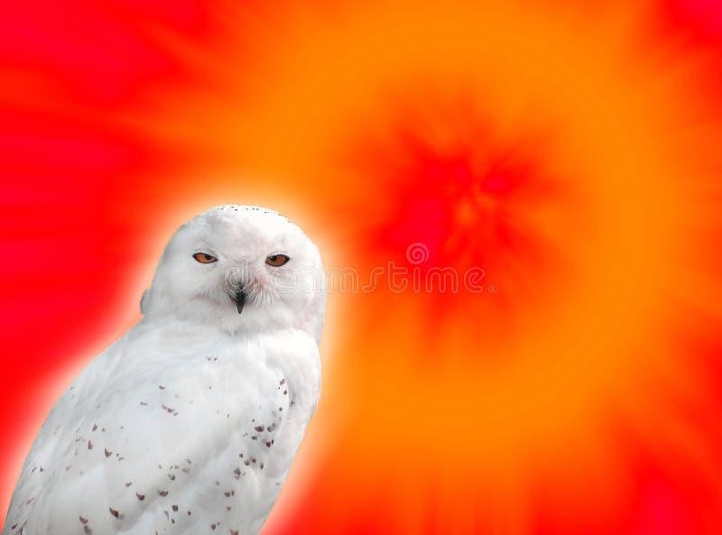 Sneeuw uil royalty-vrije stock foto's