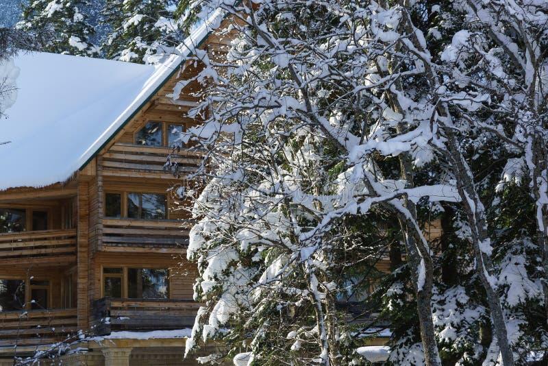 Sneeuw-uitgestrooide boomtakken op de achtergrond van een schilderachtig blokhuis royalty-vrije stock fotografie