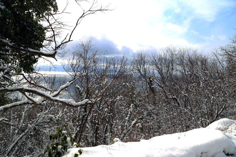 Sneeuw vóór Kerstmis stock fotografie