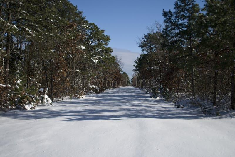 Sneeuw weg en bomen stock afbeeldingen