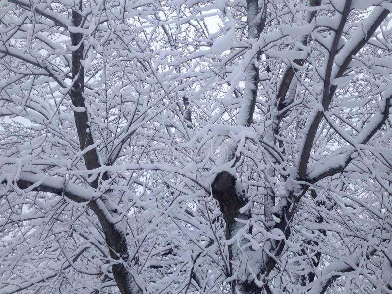 Download Sneeuw witte bomen! stock foto. Afbeelding bestaande uit bomen - 54076342