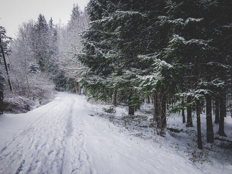 Sneeuwaard in de wintertijd stock afbeelding