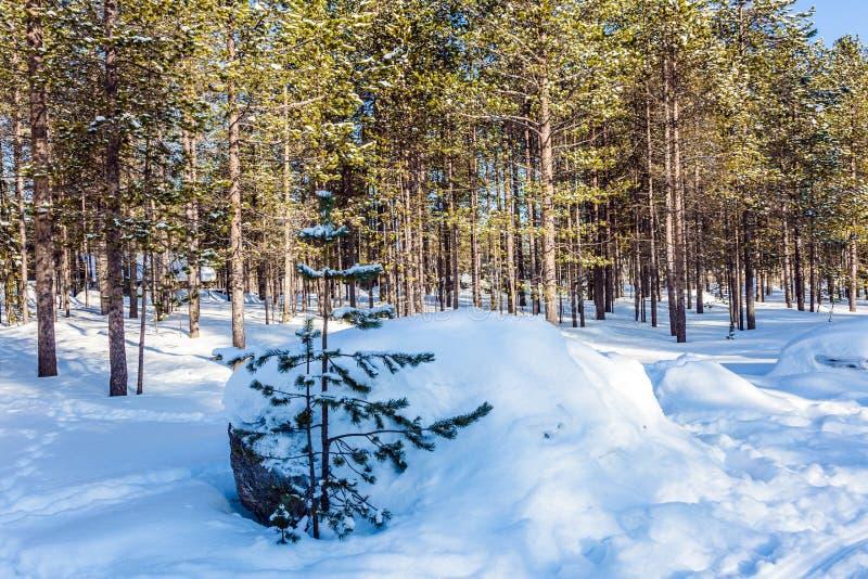 Sneeuwafwijkingen stock afbeeldingen