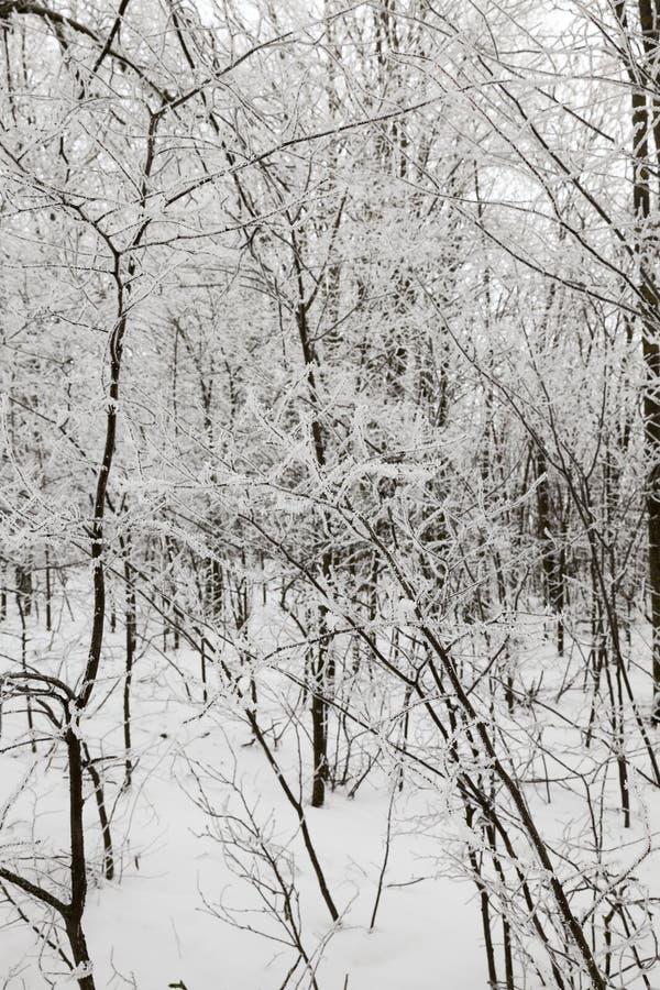 Sneeuwafwijkingen in de winter stock afbeeldingen