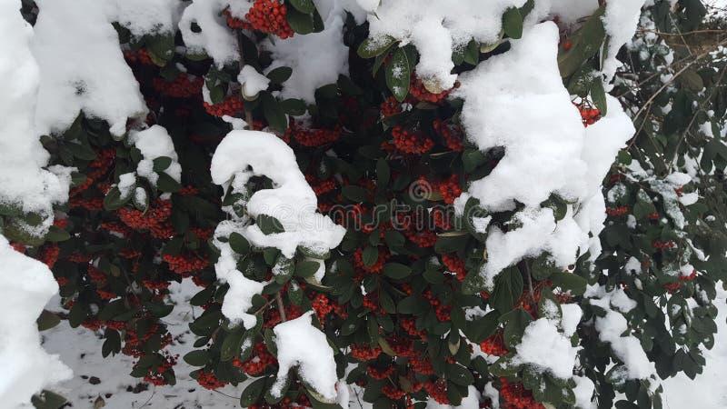 Sneeuwbes stock fotografie