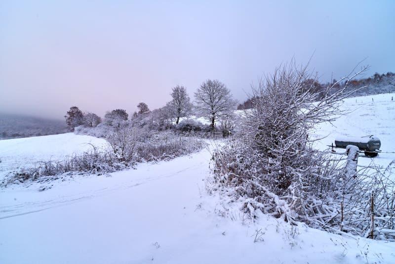 Sneeuwbomen en weg door de gebieden royalty-vrije stock foto