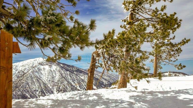 Sneeuwbomen op het Bos van Bergridge in the angeles national, Californië stock afbeelding