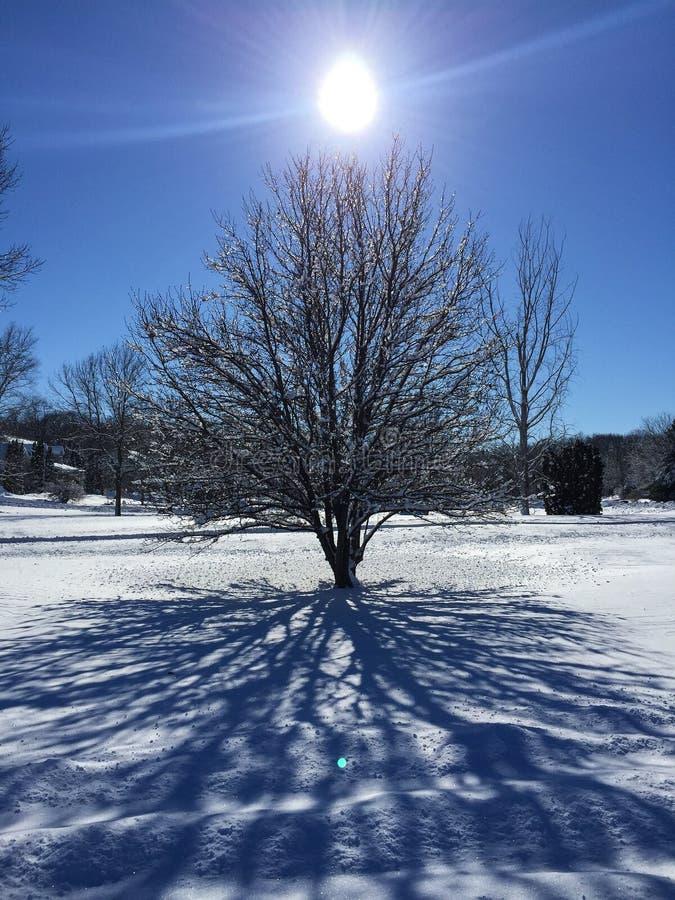 Sneeuwboom en zon stock foto's