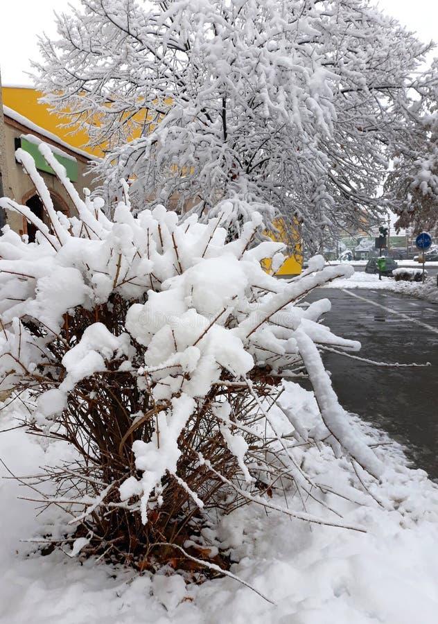Sneeuwboom met oranje muren op de achtergrond stock afbeelding