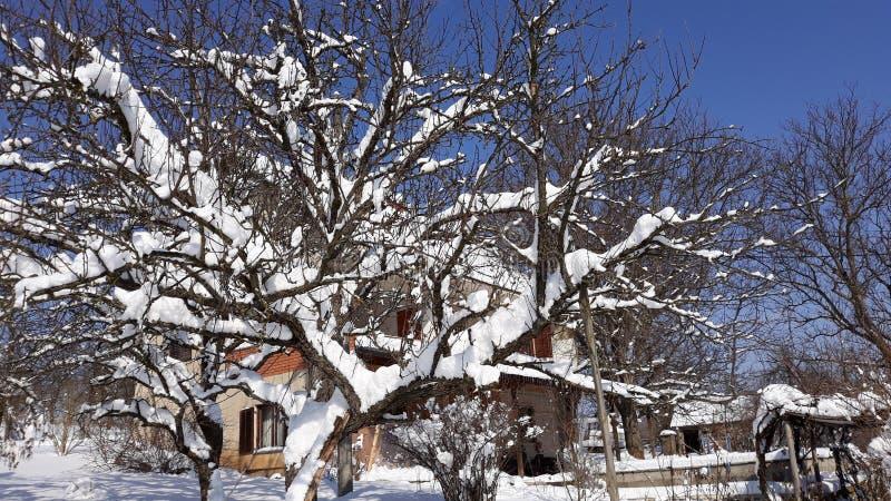 Sneeuwboom op zonnige blauwe hemel stock afbeelding