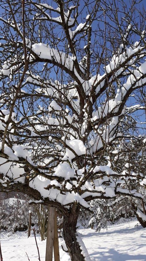 Sneeuwboom op zonnige blauwe hemel royalty-vrije stock afbeeldingen