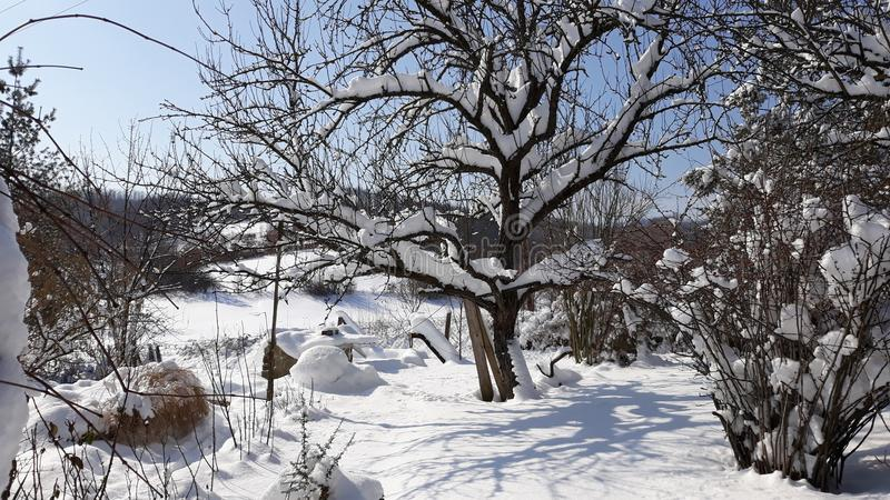Sneeuwboom op zonnige blauwe hemel royalty-vrije stock foto's