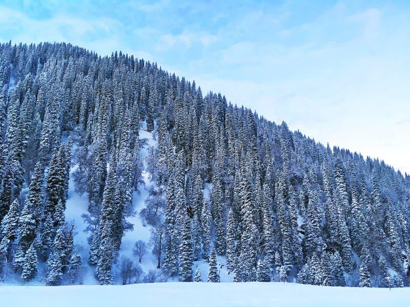 Sneeuwbos in de winter stock foto's