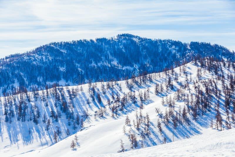 Sneeuwbos in de winter Het snow-covered Gongnaisi-bos in de winter stock afbeelding