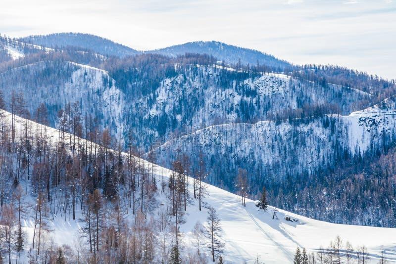 Sneeuwbos in de winter Het snow-covered Gongnaisi-bos in de winter stock afbeeldingen