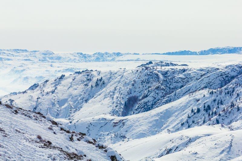 Sneeuwbos in de winter Het snow-covered Gongnaisi-bos in de winter stock fotografie