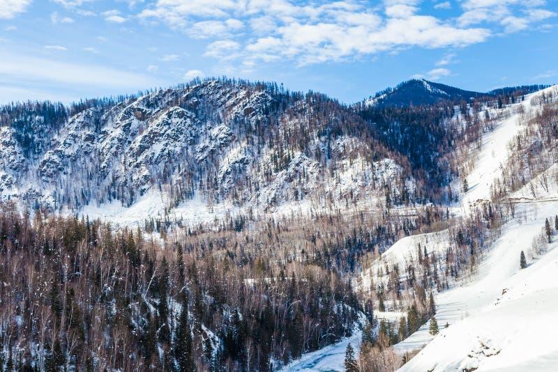 Sneeuwbos in de winter Het snow-covered Gongnaisi-bos in de winter stock foto