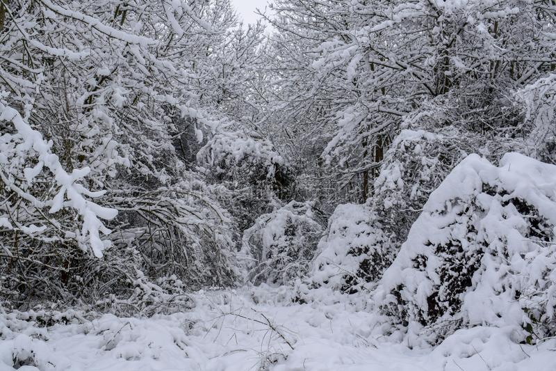 Sneeuwbos in Frans Platteland tijdens de Kerstmisseizoen/Winter royalty-vrije stock foto