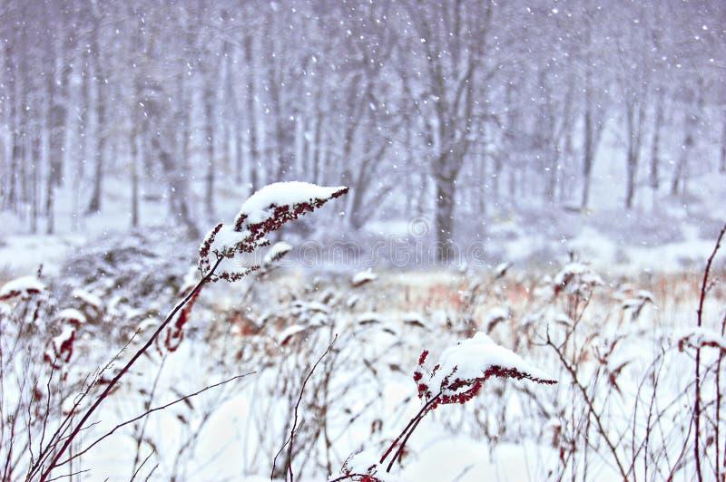 Sneeuwdalingen van de Winterweide royalty-vrije stock fotografie