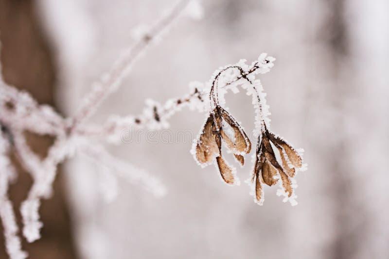 Sneeuwend landschap Details op de takken stock fotografie