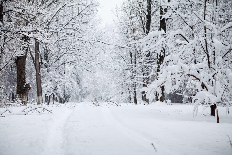 Sneeuwend landschap in het park royalty-vrije stock fotografie