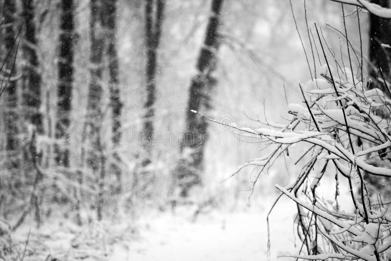 Sneeuwend landschap in het park royalty-vrije stock foto