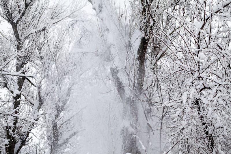 Sneeuwend landschap in het park stock afbeelding