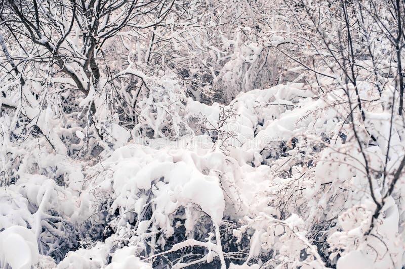 Sneeuwend onweer in Tirana in januari 2017 royalty-vrije stock afbeeldingen