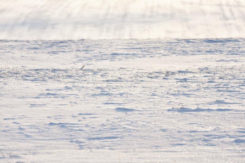 Sneeuwheuvel met strepen op gebied stock foto's