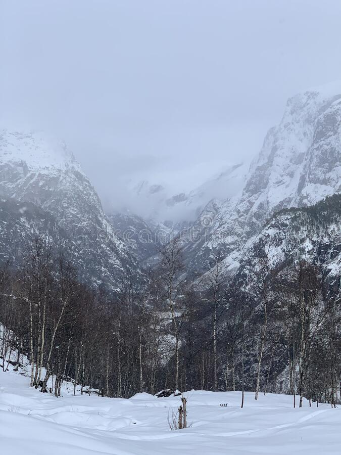 Sneeuwheuvels en bos in Noorwegen stock afbeelding
