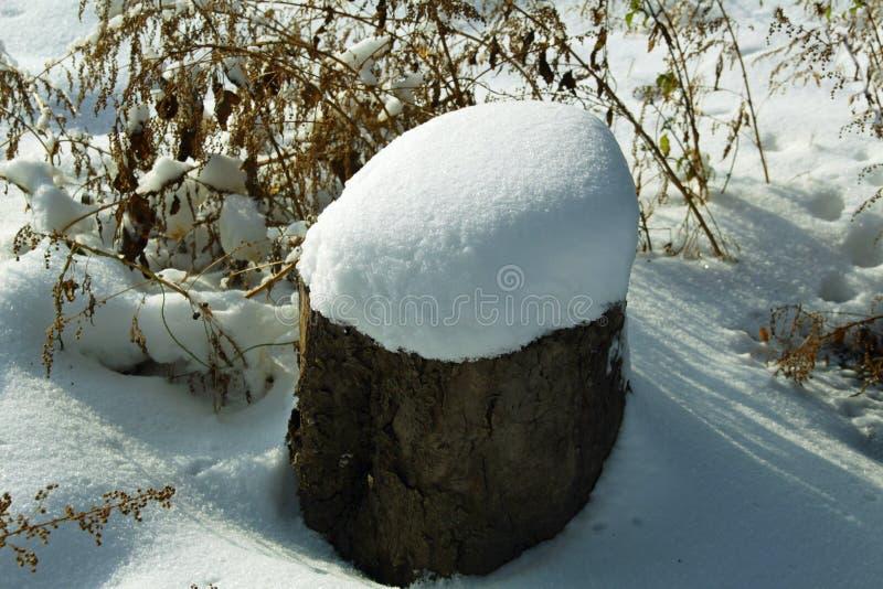 Sneeuwhoed op een felled boom royalty-vrije stock afbeelding