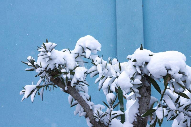 Sneeuwinstallatie met een blauwe achtergrond royalty-vrije stock afbeelding
