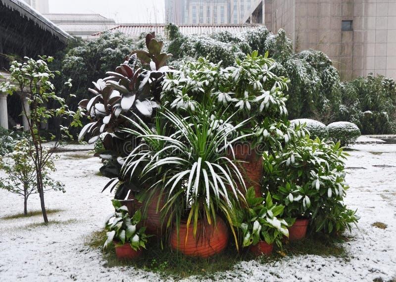 Sneeuwinstallaties in de Winter royalty-vrije stock afbeelding