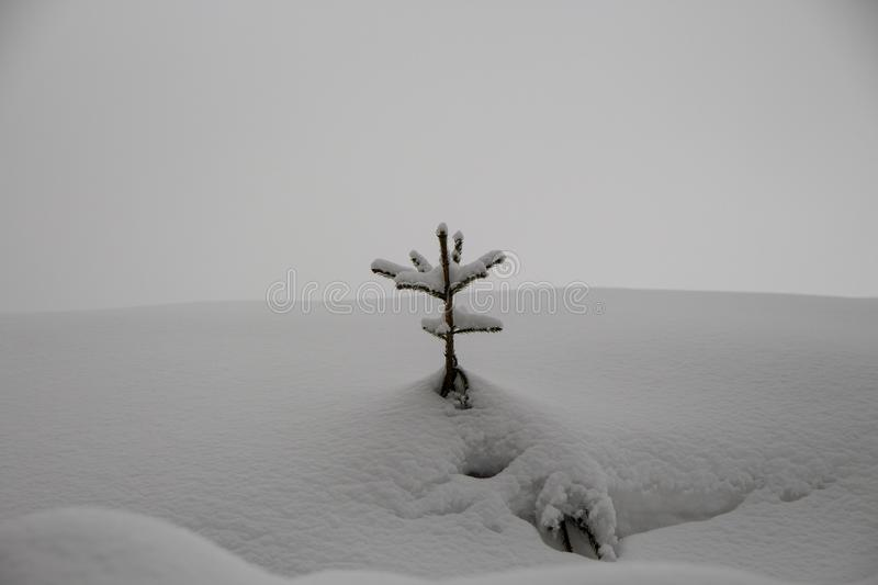 Sneeuwkerstmisboom in het bos stock foto