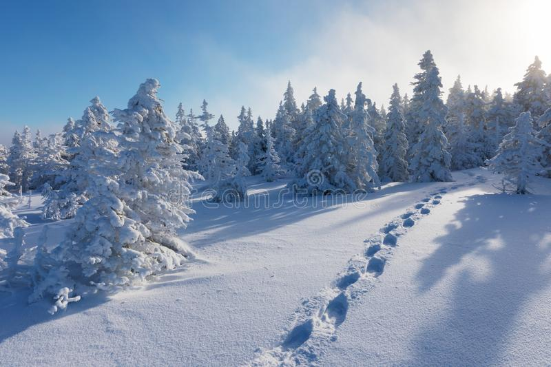 Sneeuwkerstmislandschap Zonnige dag De winterbos in sneeuw Volle maan en sterrige hemel royalty-vrije stock foto's