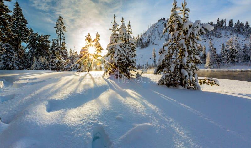 Sneeuwkerstmisscène in de winter royalty-vrije stock afbeelding