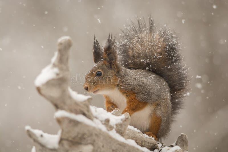 Sneeuwkleding stock afbeeldingen