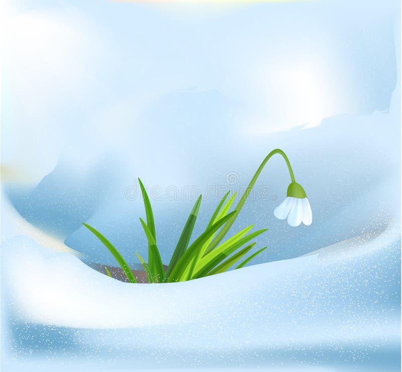 Sneeuwklokje royalty-vrije illustratie