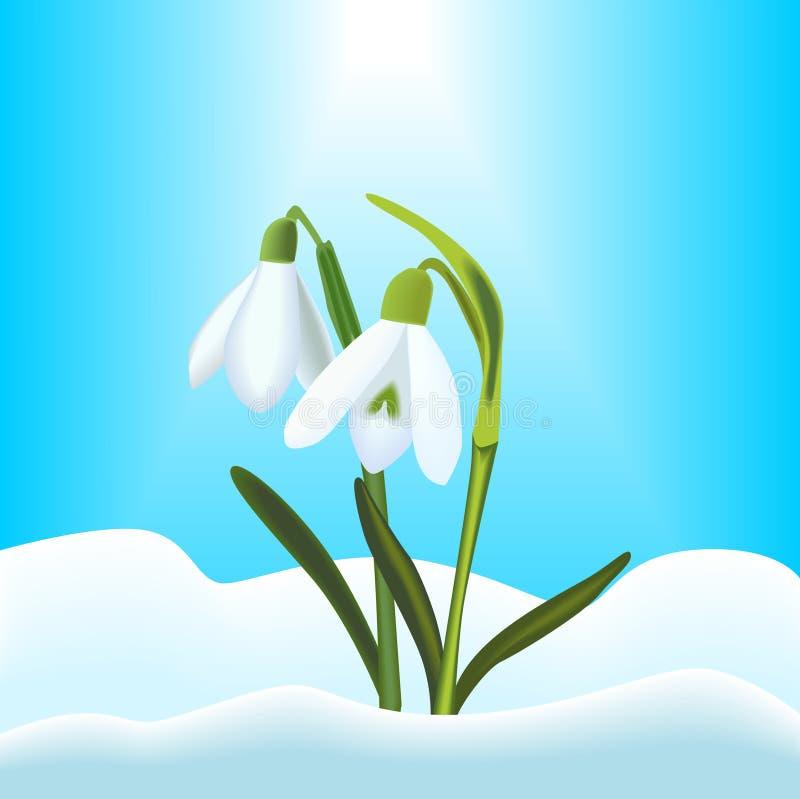 Sneeuwklokjes stock illustratie