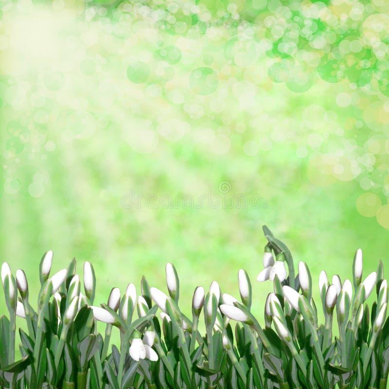 Download Sneeuwklokjes Op Groene Abstracte Achtergrond Stock Afbeelding - Afbeelding bestaande uit bloemen, groep: 29507467